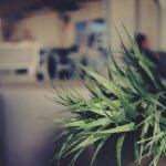 Como transportar plantas na mudança