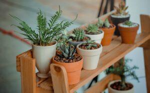 Transportar plantas na mudança